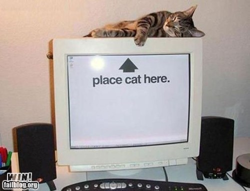 called shot Cats computer kitties - 6412368640
