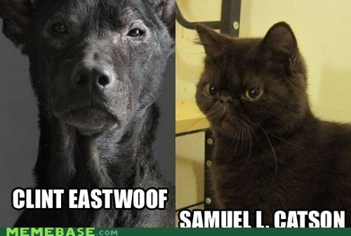 cat Cats Clint Eastwood dogs names puns Samuel L Jackson - 6412649728
