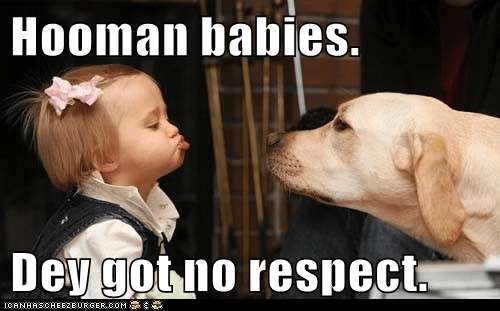 baby dogs hoomin lab no respect - 6412822784