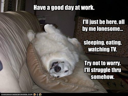Have a good day at work. I'll just be here, all by me lonesome... sleeping, eating, watching TV. Try not to worry. I'll struggle thru somehow.