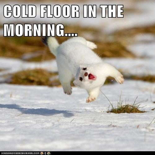 captions cold flip jump morning snow startled weasel