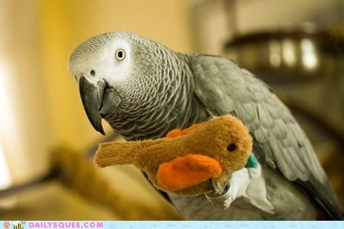 bird doll parrot pet reader squee stuffed animal - 6413543168