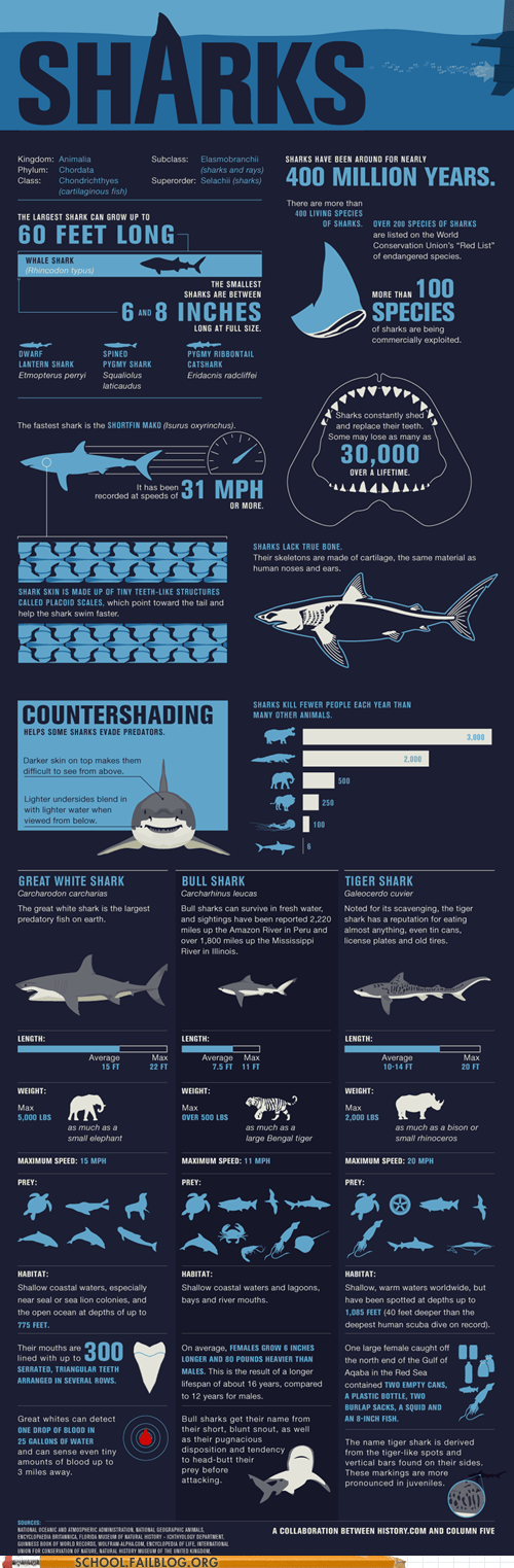 class is in session,infographics,Marine Biology 220,shark week,sharks,the Roosevelts