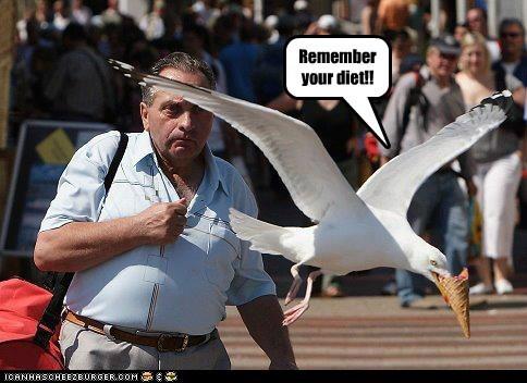 captions counting calories diet fat flying ice cream seagull stealing - 6413678080