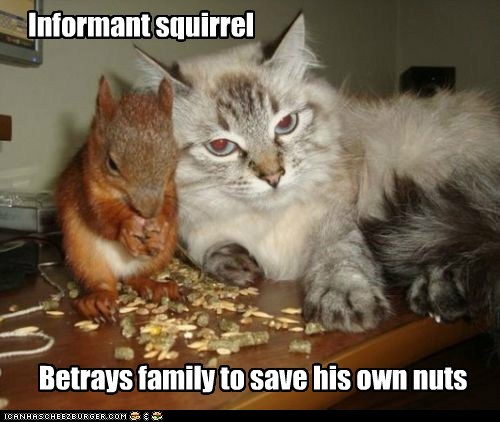 Informant squirrel Betrays family to save his own nuts