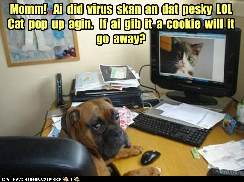 boxer,cat,computer,cookies,dogs,virus scan