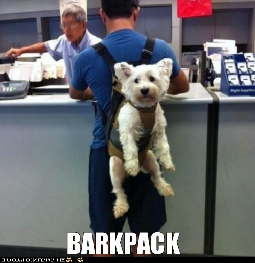 backpacks,captions,dogs,harnesses,puns,wtf