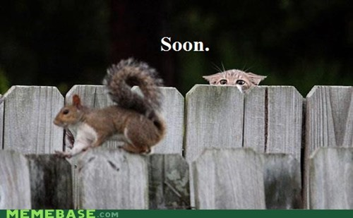 cat internet Memes SOON squirrel video games - 6414206976