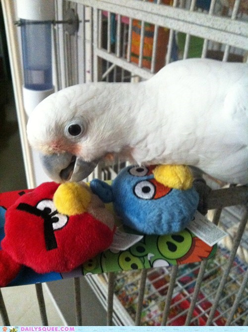angry birds bird cockatoo parrot reader squee toys - 6414382592