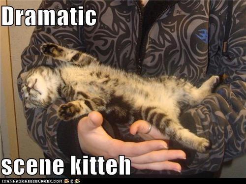 Cats classic classics collapse drama dramatic faint overreaction - 6414445824