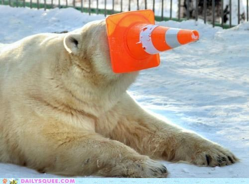 hide and seek,hiding place,polar bear,snow,traffic cone orange