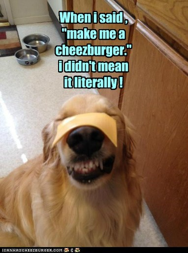 cheese cheezburgers dogs golden retriever literally - 6414607360