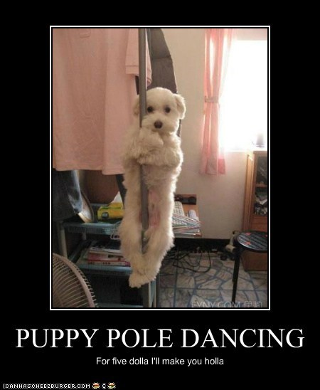 PUPPY POLE DANCING For five dolla I'll make you holla