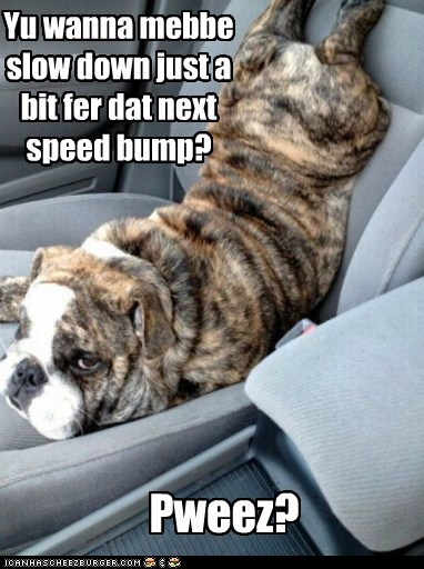 Yu wanna mebbe slow down just a bit fer dat next speed bump? Pweez?