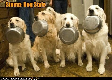 Stomp: Dog Style