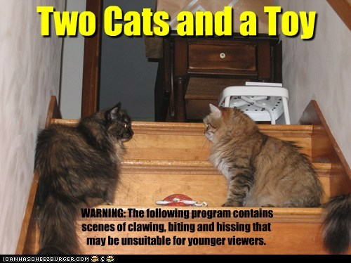 Two Cats and a Toy WARNING: The following program contains scenes of clawing, biting and hissing that may be unsuitable for younger viewers.