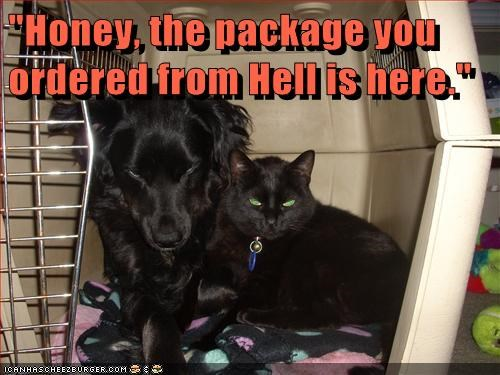 best of the week,black cat,cat,dogs,evil eyes,Hall of Fame,hell,kennel,what breed