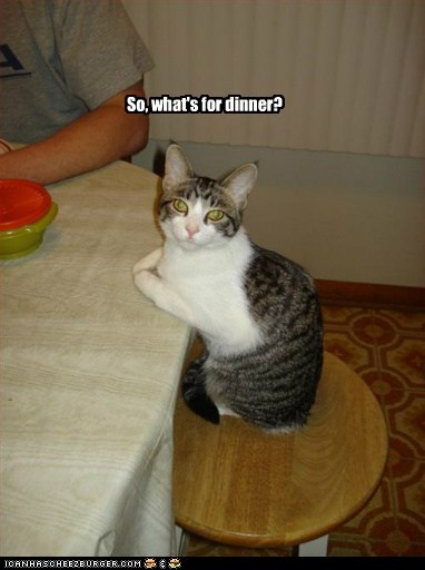 captions Cats dinner eat food hungry presuming sit table - 6415745536