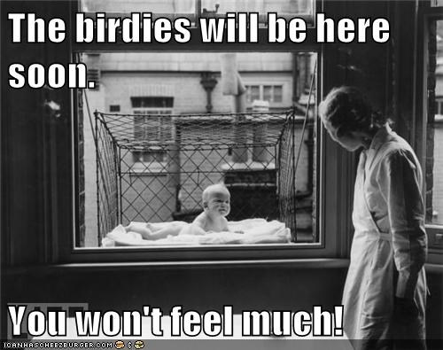 baby,birds,cage,carnage,window
