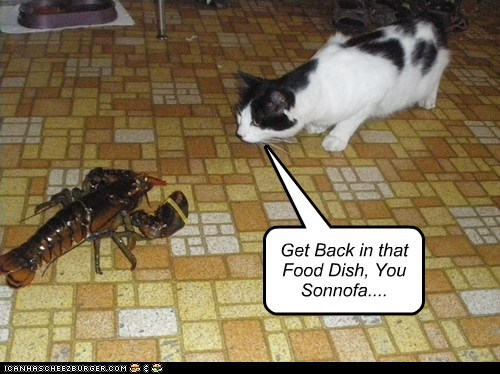 Get Back in that Food Dish, You Sonnofa....