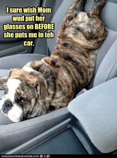 bulldog,captions,car,dogs,glasses,mistake,upside down dog
