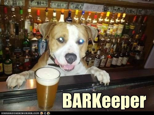 bar,bartender,beer,dogs,what breed,working dog