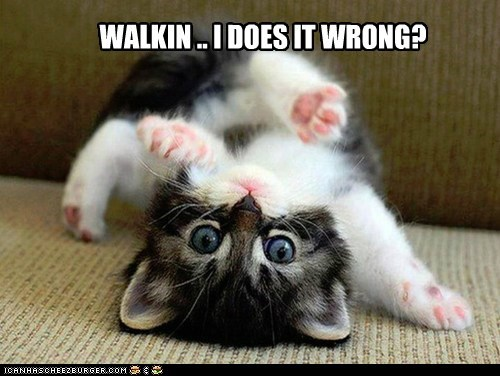 captions Cats couch FAIL kitten upside down walk - 6416657664