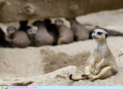 bullied meerkat sand unique different squee