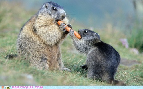 carrot nom prarie dogs sharing is caring snack - 6416861696