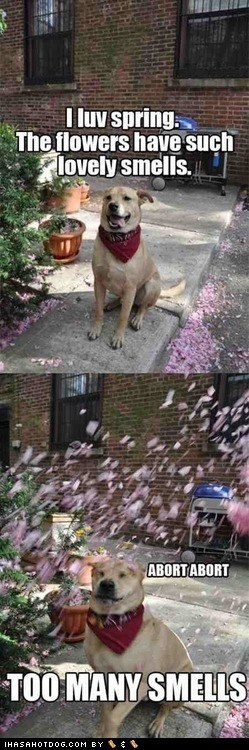 abort captions dogs flowers smells spring what breed - 6416868352