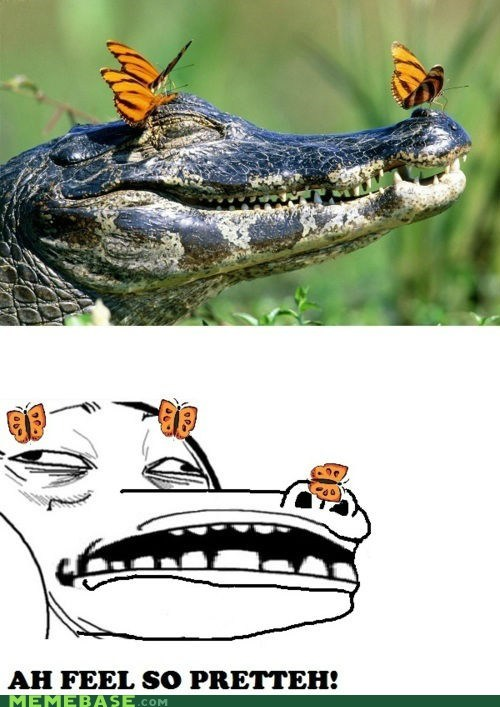 alligator,butterflies,pretty,Rage Comics