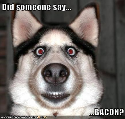 Afbeeldingsresultaat voor did somebody say bacon meme