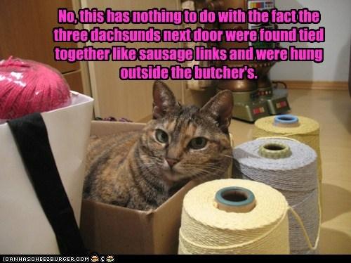 butcher captions Cats mischief plan sausage secret string - 6416912128