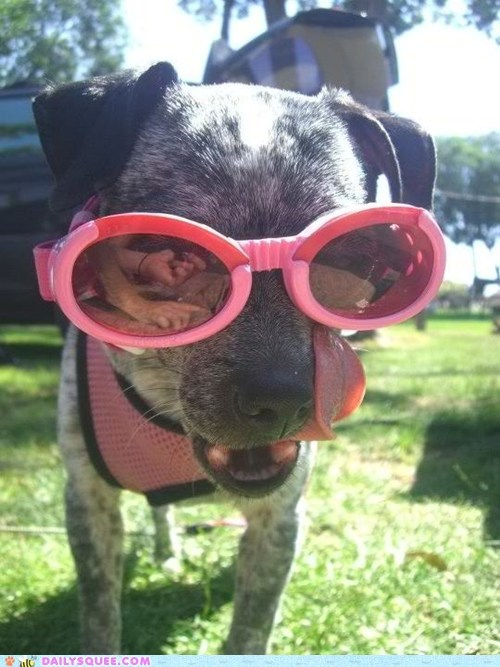 dogs,goggles,pet,reader squee,sunglasses
