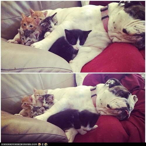 Cats cuddles cuddling dogs goggies r owr friends Interspecies Love kitten