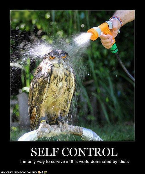anger,captions,hoses,idiots,owls,restraint,self control,water,wet