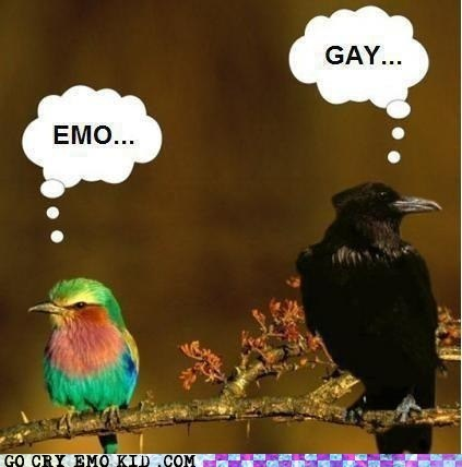 birds,emo,gay,judgmental,weird kid
