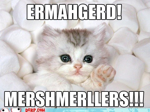 best of week cat cute derp Ermahgerd marshmellow - 6417271296