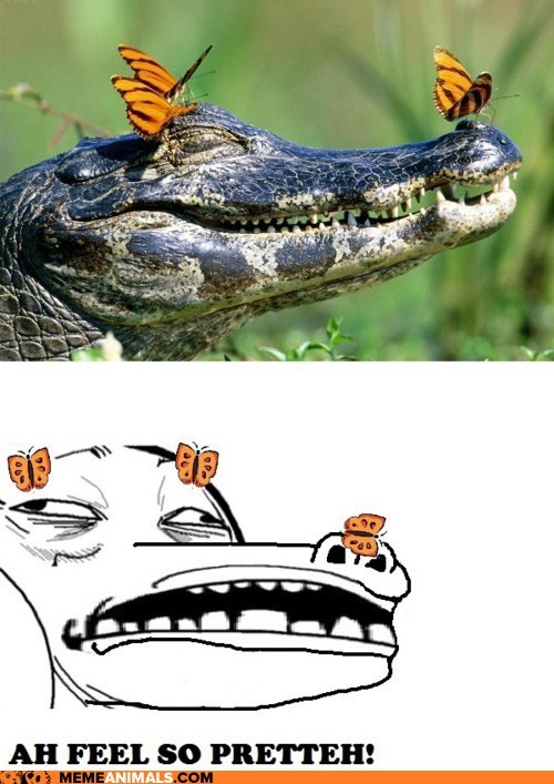alligators butterflies crocodiles Hall of Fame i feel pretty Memes multipanel pretty Rage Comics - 6417303552
