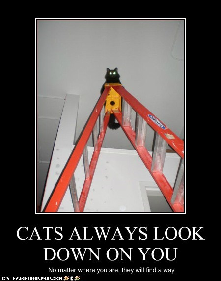 CATS ALWAYS LOOK DOWN ON YOU No matter where you are, they will find a way
