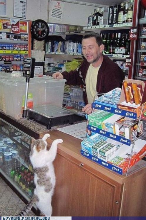 cat,cc,convenience store,crunk critters,id,kitteh,liquor store,under 21