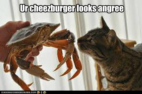 angry,captions,Cats,cheezburgers,confused,crab,eat,food,smell
