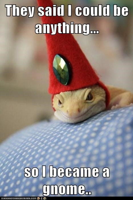 gnome,hat,lizard,so i became x,they told me i could be a,they told me i could be anything