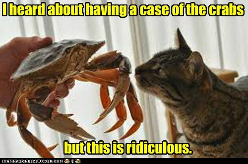 better get to a doctor, asap I heard about having a case of the crabs but this is ridiculous.