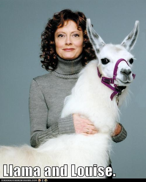 actor,animal,celeb,funny,llama,susan sarandon