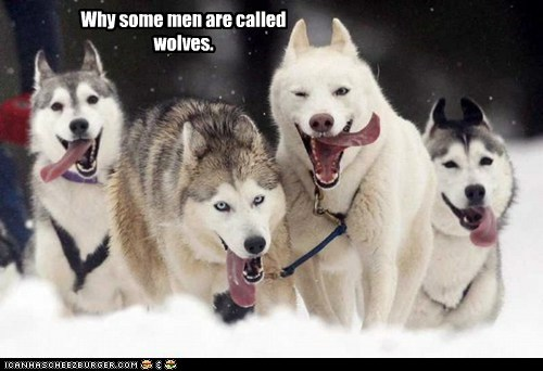Why some men are called wolves.