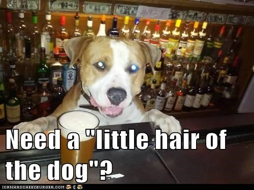 bar,bartender,beer,dogs,hair of the dog,hang over,what breed