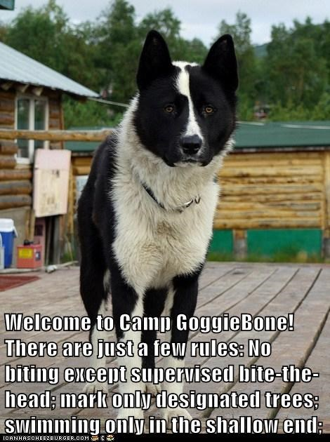 Welcome to Camp GoggieBone! There are just a few rules: No biting except supervised bite-the-head; mark only designated trees; swimming only in the shallow end;