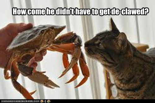 cat crab declawed pinching unfair