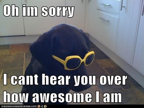 arrogant,awesome,dogs,sunglasses,what breed